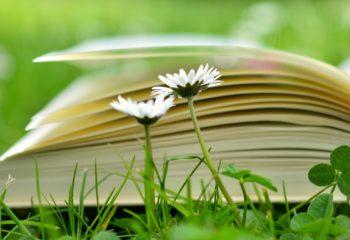 book-2304389_1920